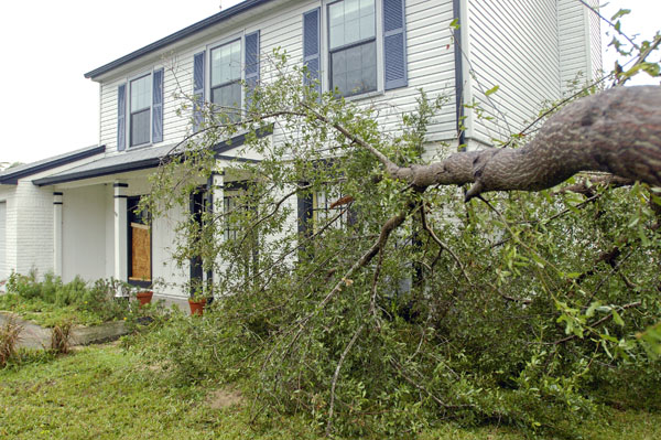 This tree missed our house by inches after Hurricane Jeanne in 2004.