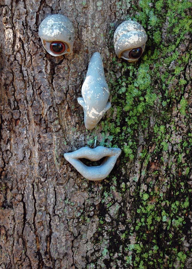 Face on Mango Tree