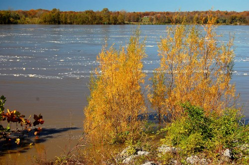 View of Mississippi River at flood from Thebes, IL, scenic overlook
