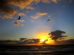 Birds over Lake Worth Beach 01 01 2011 by Lila Steinhoff 1611 150x112 New Years Resolution Riders